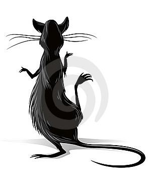 black-rat-illustration-thumb6827753